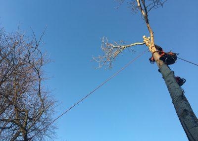 Huonokuntoisen puun poisto ahtaasta paikasta.
