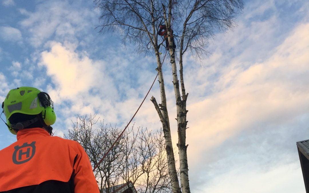 Asiakaskokemuksia puunkaadoista
